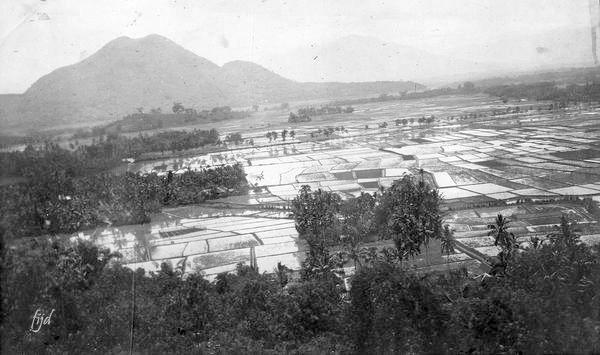 Pemandangan Sawah Dan Gunung Di Leles Garut Jawa Barat Sekitar 1915 Pemandangan