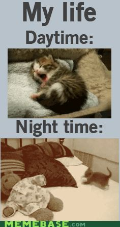 So true for me. (Make sure you click on this to see the cute cat running.)