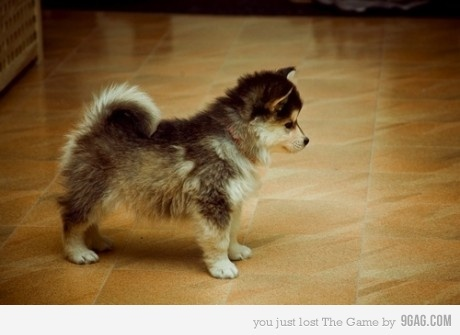 This puppy will be mine one day