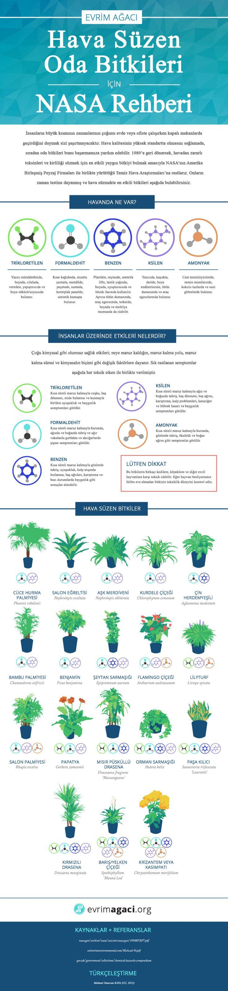 Odanızda Hangi Bitkilere Yer Vermelisiniz? – Evrim Ağacı