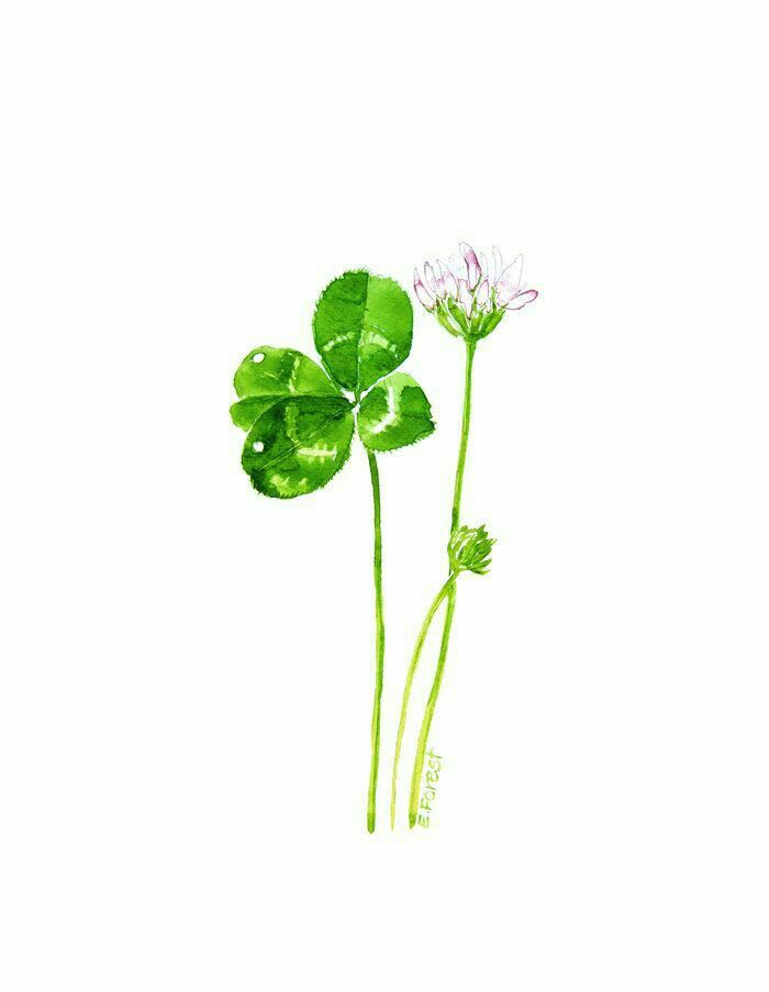 I'm Looking Over a 4-Leafed Clover- That I've Overlooked Before....