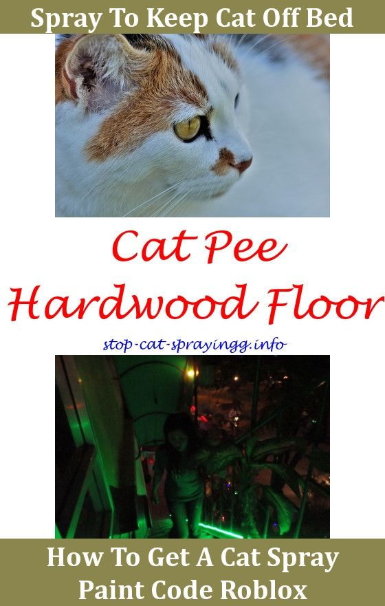 Cat Pee Repellent What Do Cats Look Like When They Spray,does spray bottle work