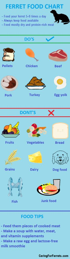 Check out this chart on how to feed your ferret!