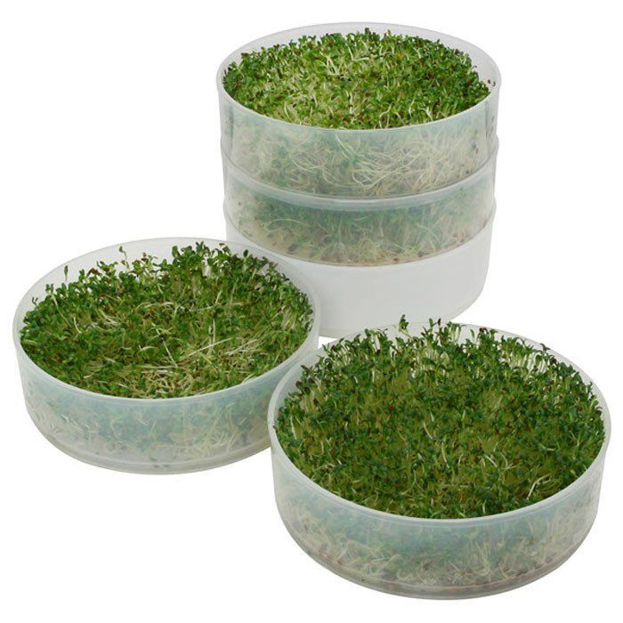 Victorio 4-Tray Seed Sprouter