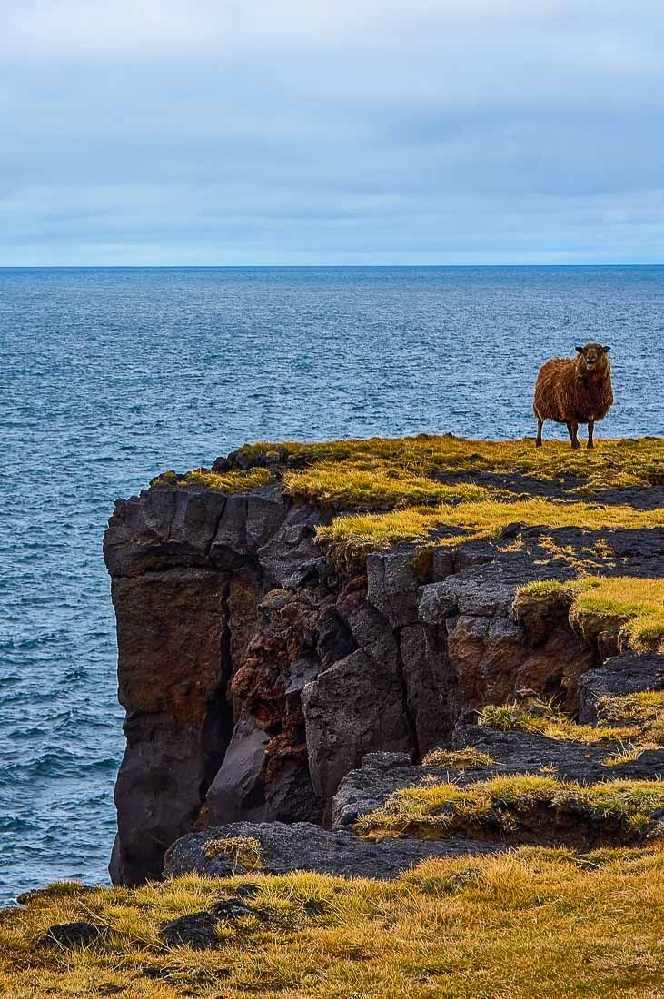 Our Iceland road trip around the Snaefellsnes Peninsula | Things to Do in Iceland | What to Do in Iceland | Day trips from Reykjavik | Road trip in Iceland | Iceland Travel Tips