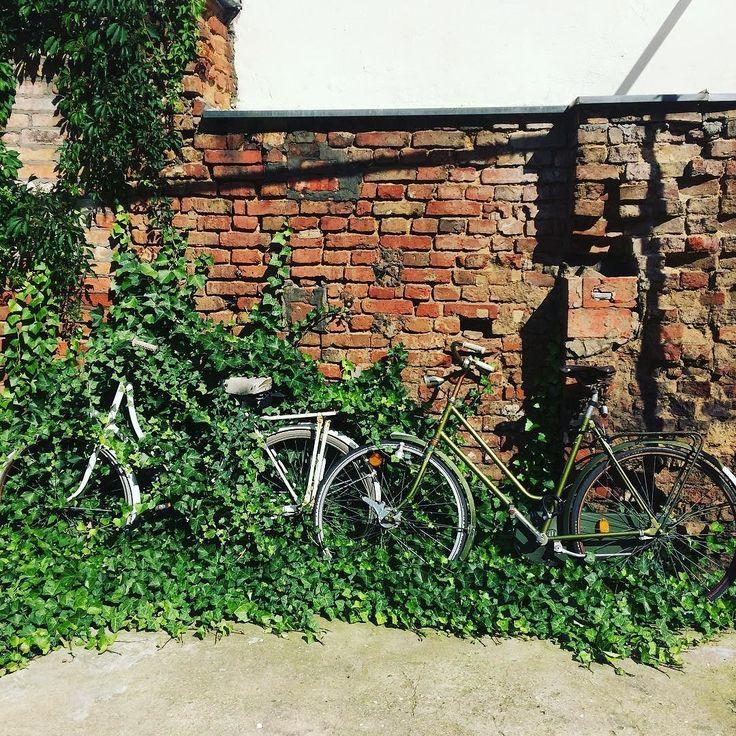 The backyard of the cafe @bardzokawiarnia in Poznań  . . . #instawall #cafelife #instalife #hipsterplace #summervibes #bikes #cafeteria #backyardgarden #hidden #urbex #urbexpeople #igerspoznan #grupamobilni #igerspoland #igerseurope