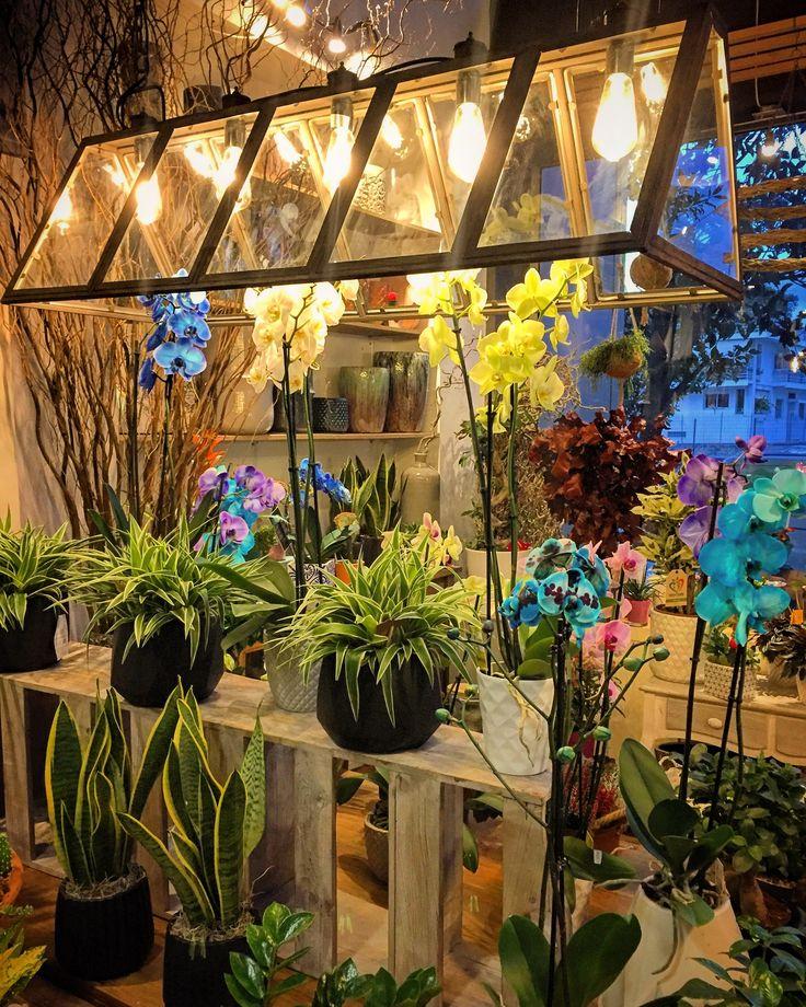 Fleurs trikala greece flowershop