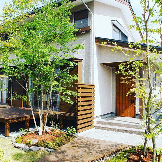 お庭にシンボルツリーのシマトネリコを植える。緑が1本でもあるだけで雰囲気が変わりますよ〜 #シマトネリコ #シンボルツリー #田舎暮らし #霧島市 #シンプルライフ #家づくり #外観 #木の家 #住まいず