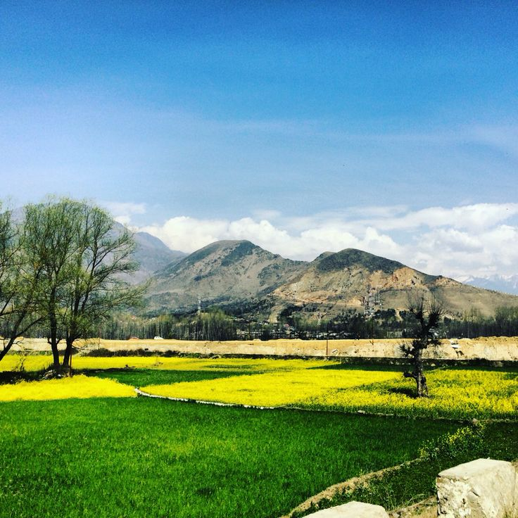 Spring outset in Kashmir #kashmir #beauty #paradise #colors