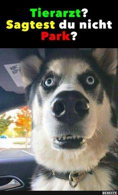 Besten Bilder, Videos und Sprüche und es kommen täglich neue lustige Facebook … – T.F Voss