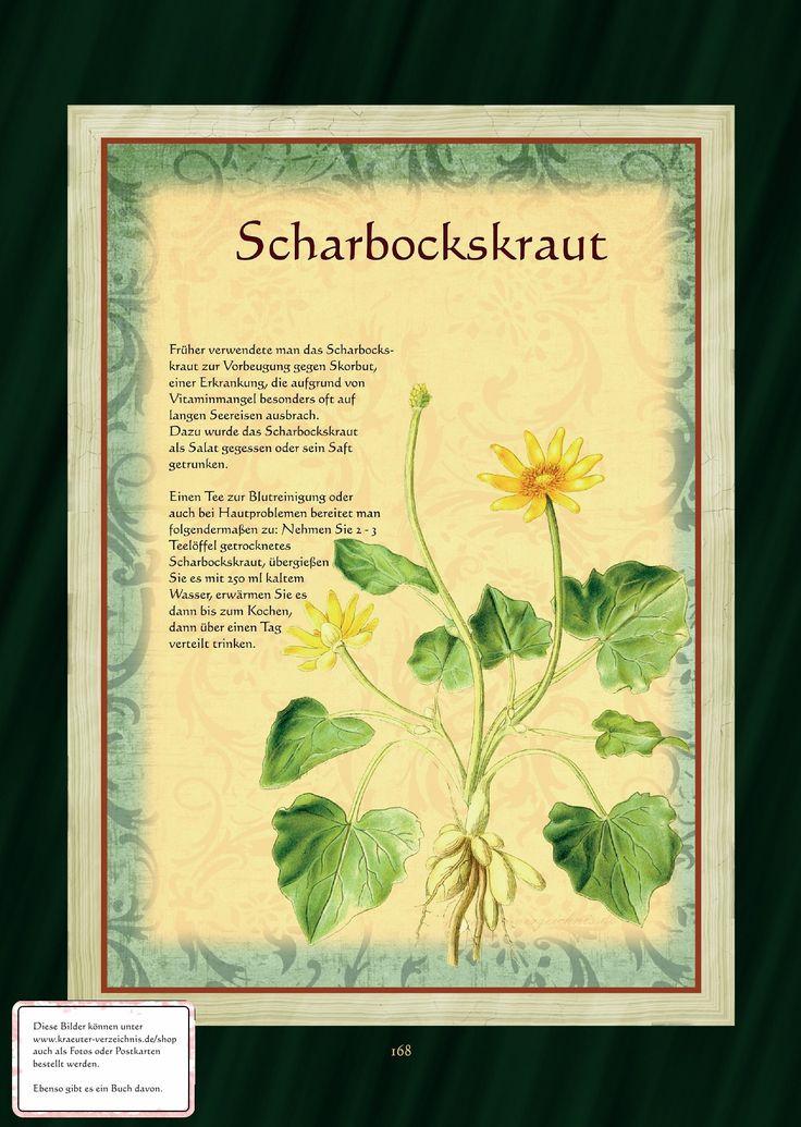 http://www.kraeuter-verzeichnis.de/BuchBilder/168.jpg