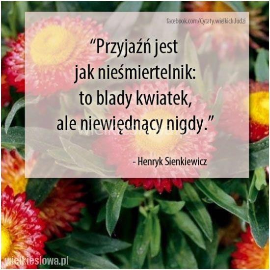 Przyjaźń jest jak nieśmiertelnik: to blady kwiatek... #Sienkiewicz-Henryk,  #Przyjaźń