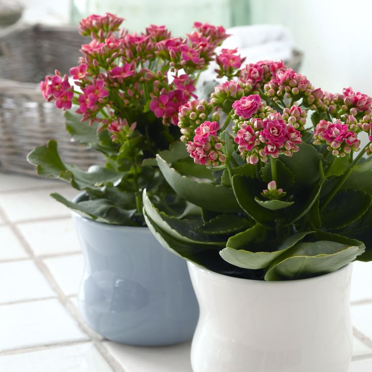 7 Best Images About Queen Potted Plants On Pinterest