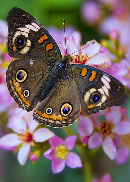 Happy Little Butterfly | by Saija Lehtonen