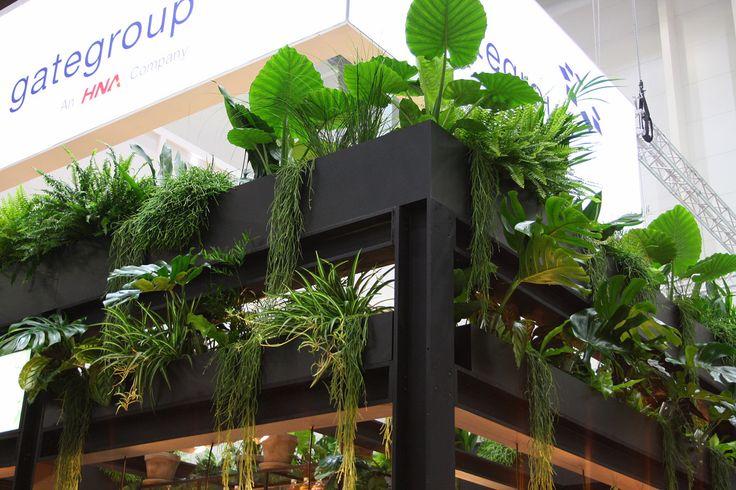 67 Besten Rent A Plant Pflanzen Zum Mieten Flower