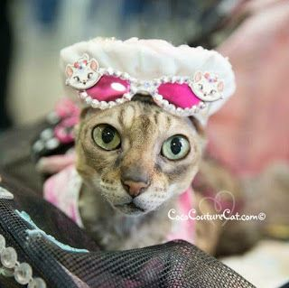 Coco, the Couture Cat: Fashion Friday, Ocean City Style