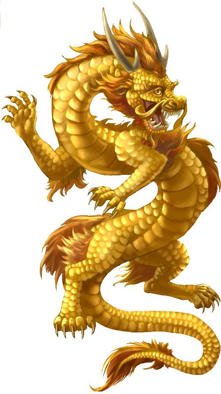 25 unique Asian dragon tattoo ideas on Pinterest  Dragon tattoo