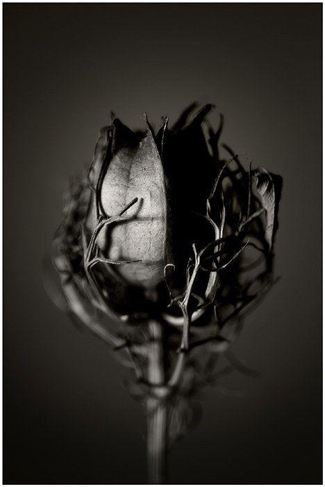 whereyouleastexpectit:  Still Life Photography by Malgorzata Krawczyk