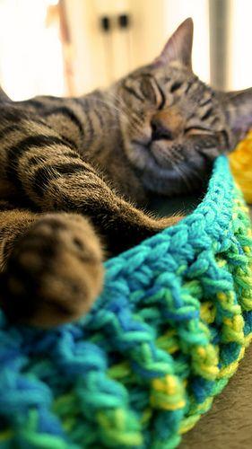 Technicolor Cat Bed
