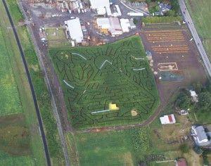 2011 Corn Maze at Spooner Farms Harvest Festival. Puyallup, WA