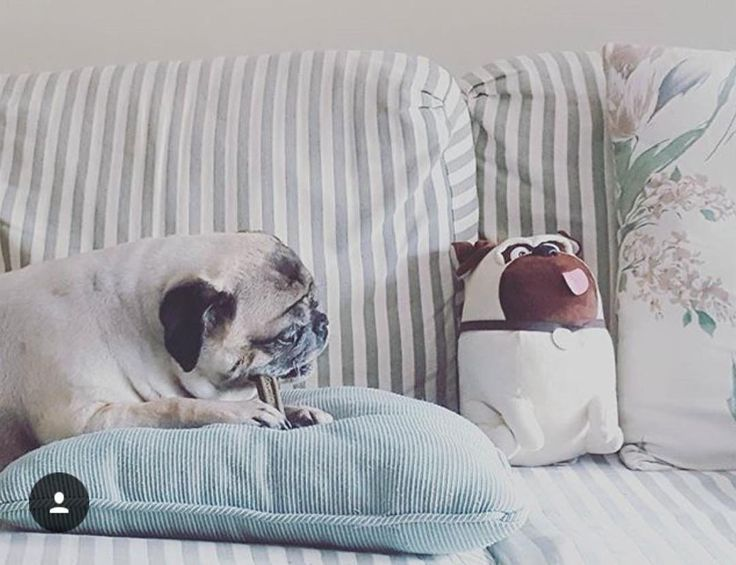 Meet Buster and his mini-me as they enjoy a snack on their mom's green accent pillow. Show us how you incorporate the color GREEN into your home like @dmv32487 and Buster did in an Instagram before Friday at 11:59PM and you'll be entered into a chance to win a $250  AFW gift card! 1. Follow Us On Instagram  2. Tag @AFWonline 3. Use the Hashtag #AFWatHome Click link in bio  for full instructions and rules!