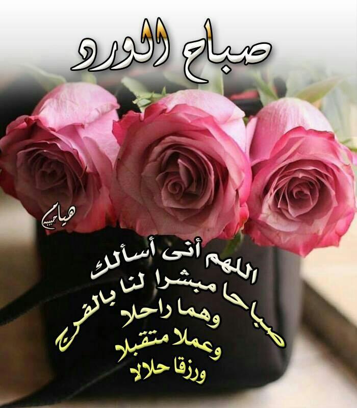 Pin By Hala Khatib On صباح الخير Flowers Plants Rose