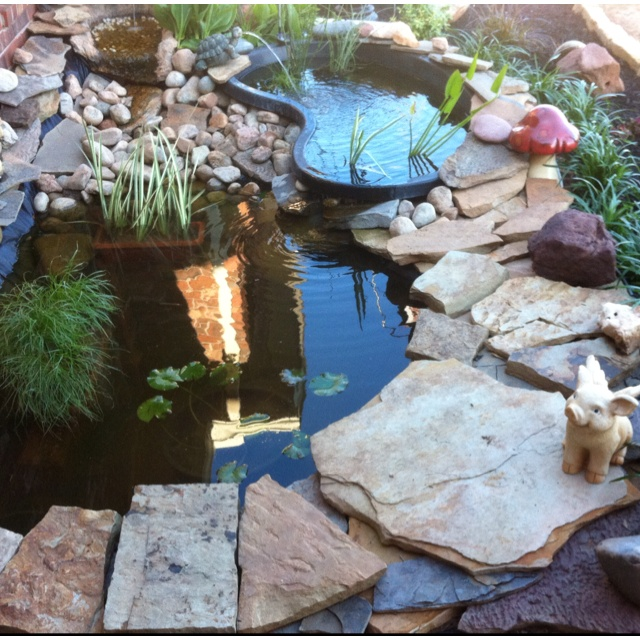 My fish pond that keith and i have been working on still for Koi pond plastic pool
