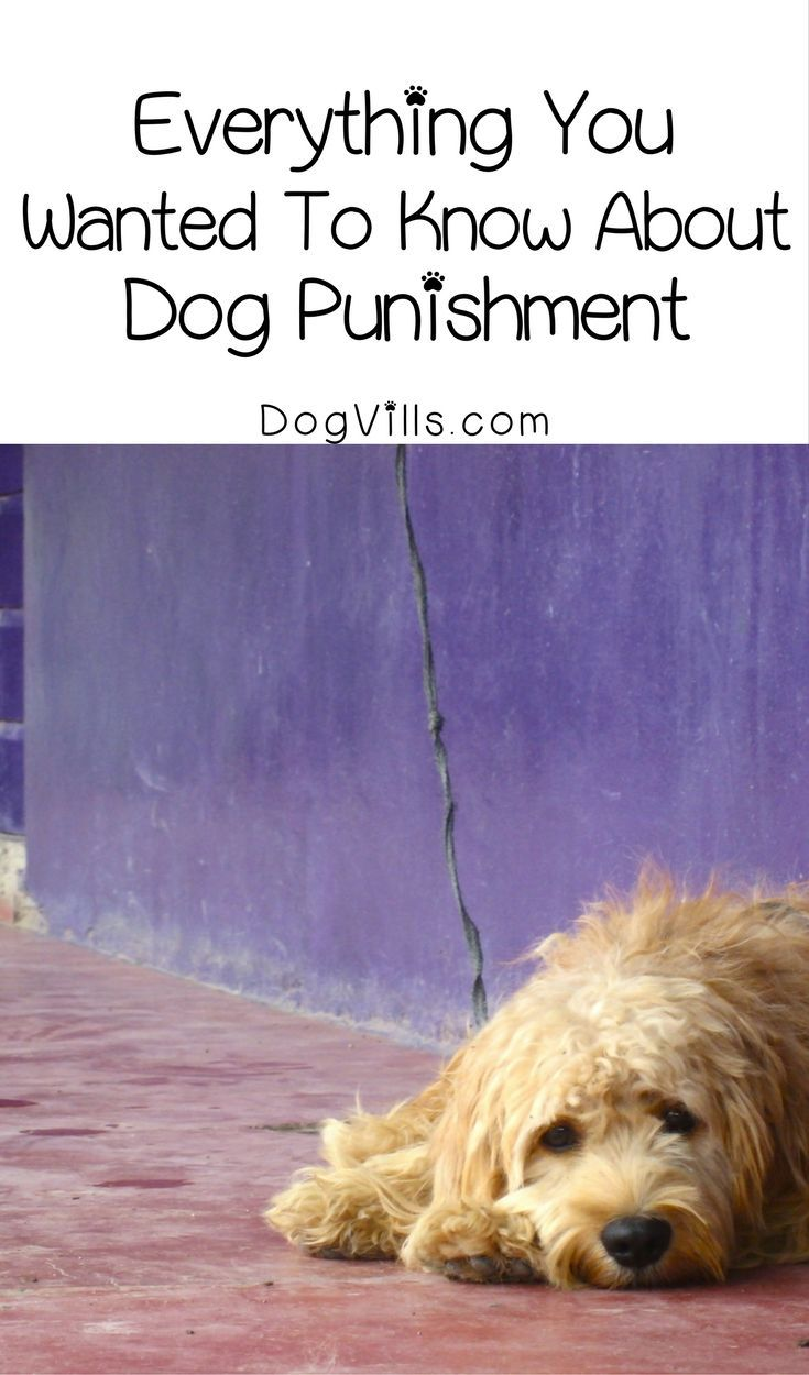 How do you discipline a dog? Here's a hint: dog punishment does not work! Check out training tips to make sure you're not making major mistakes when it comes to discipline!