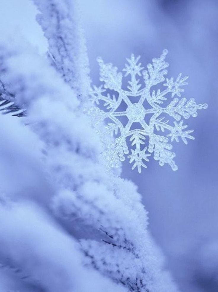 Snowflakes ☄ #beautiful