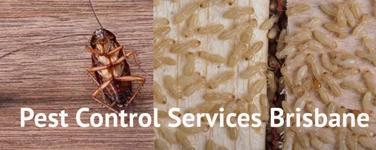 My Home Pest Control offers a full range of pest control services for your domestic or business property, no matter the size of it. We provide unparalleled pest control in Brisbane and its nearby areas.