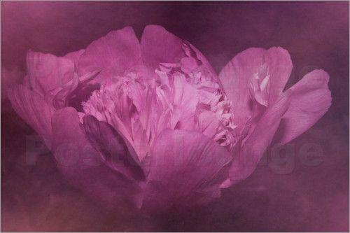 Christine Bässler - Pfingstrose lila