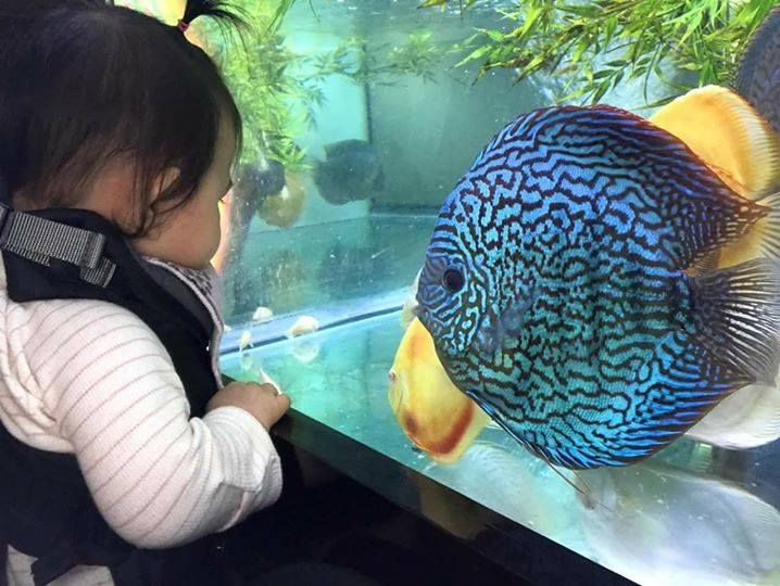 Photo Gallery Of Discus Fish Live Tropical Fish Live Tropical Fish In 2020 Discus Fish Discus Aquarium Coral Fish Tank