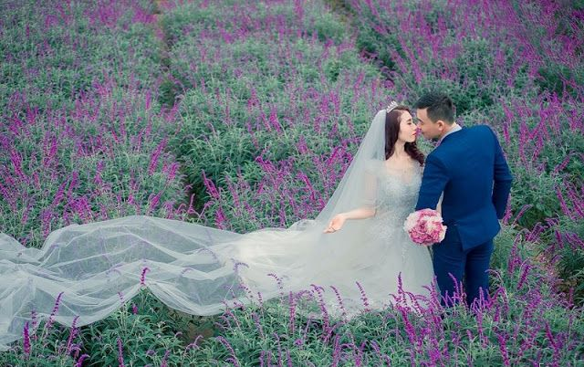 Lavender harvest season in Lao Cai