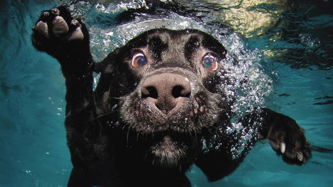 Cute Dogs Underwater Will Warm Your Heart (PHOTOS) - weather.com