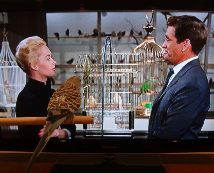 Tippi Hedren and Rod Taylor in THE BIRDS (1963). Directed by Alfred Hitchcock.