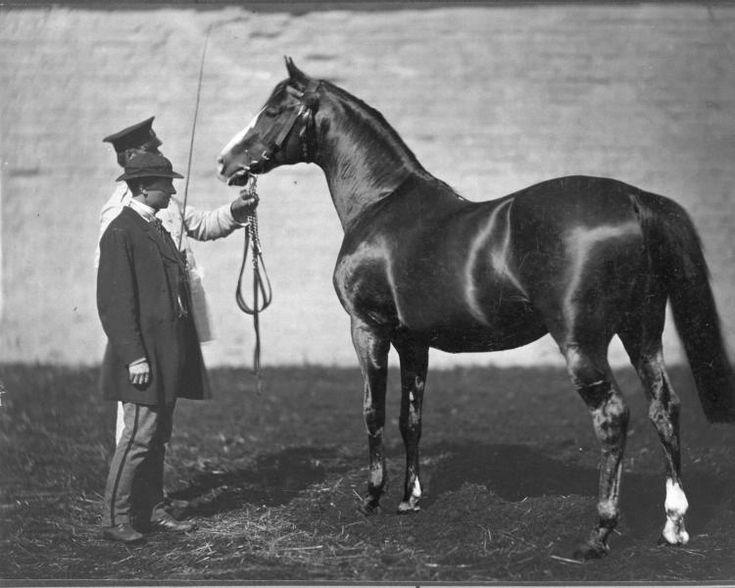 Жеребец Карактакус (Caractacus), 1859 г. победитель Эпсомского Дерби