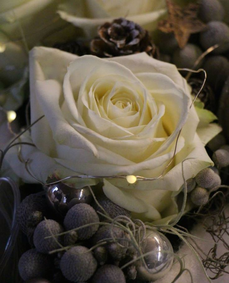 17 Best Images About Very Merry Christmas By Meijer Roses