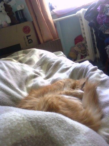 Кошка спит, она устала.)