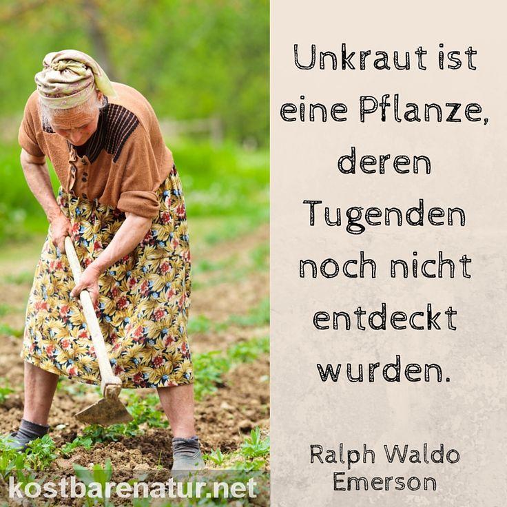 654 best Garten images on Pinterest Urban gardening, Garage - mein garten rtl