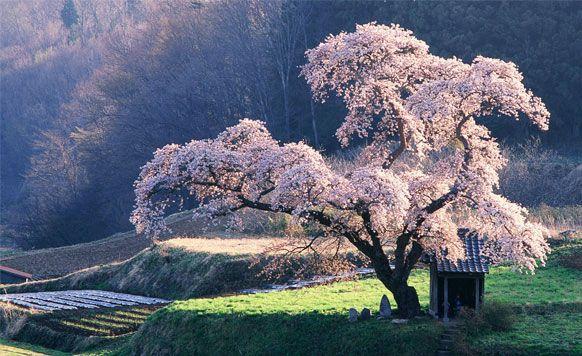 Kushiro National Park #Japan #Япония