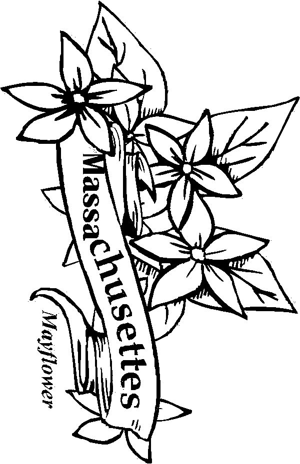 Creative Minds Coloring Book Flowers Best Nova Scotia Images On Art