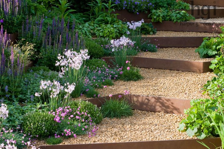 Harpur Garden Images Ltd :: Marcus Harpur A Garden for First Touch at St George's Sloping garden of green foliage. Armeria maritima, salvia and Tulbaghia planted in gravel beside step risers of rusted steel. Change of levels. Slope. Silver-Gilt medal Design: Patrick Collins Sponsor: St George's Hospital and Medical School