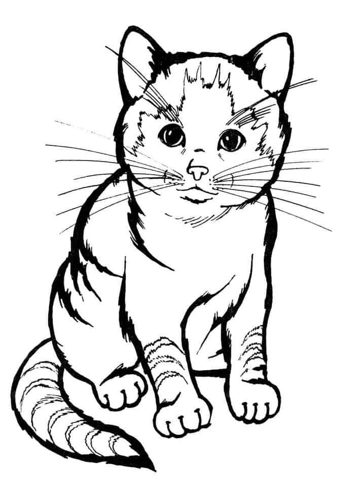 Realistic Cat Coloring Pages Printables Cat Coloring Page Animal Coloring Pages Fox Coloring Page