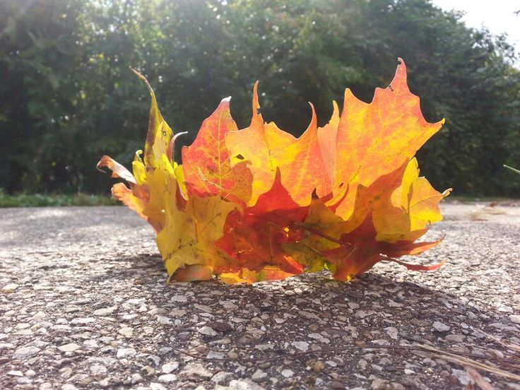 Leaf crowns  ---  --- ---Made using this tute - http://twigandtoadstool.blogspot.com/2010/10/autumn-maple-leaf-crowns.html