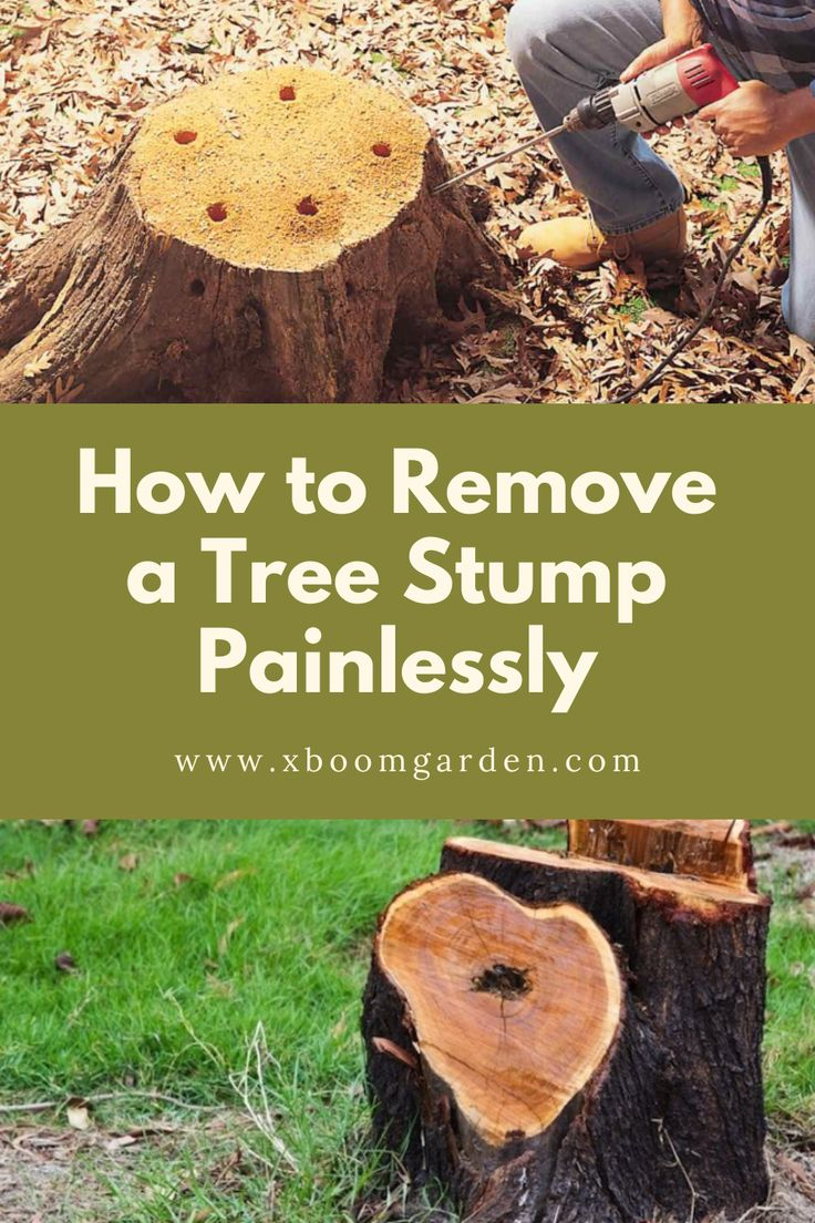 How to Remove a Tree Stump Painlessly in 2020 Gardening