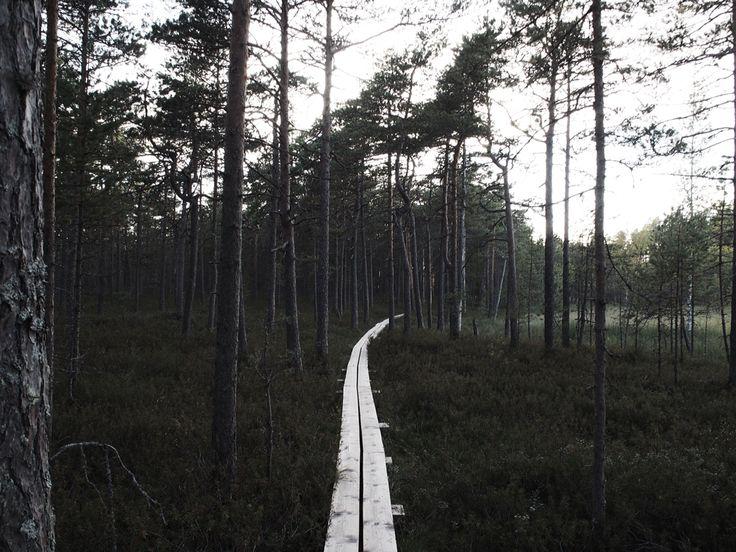 Beautiful nature in finland, Valkmusa