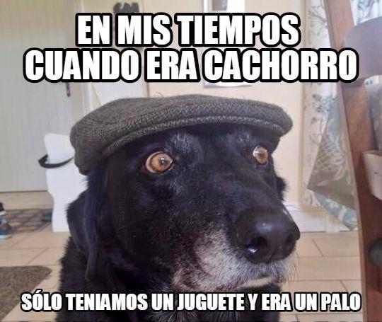 El chucho yayo        Gracias a http://www.cuantocabron.com/   Si quieres leer la noticia completa visita: http://www.estoy-aburrido.com/el-chucho-yayo/
