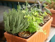 How to Plant an Herb Container Garden | Landscaping Ideas and Hardscape Design | HGTV