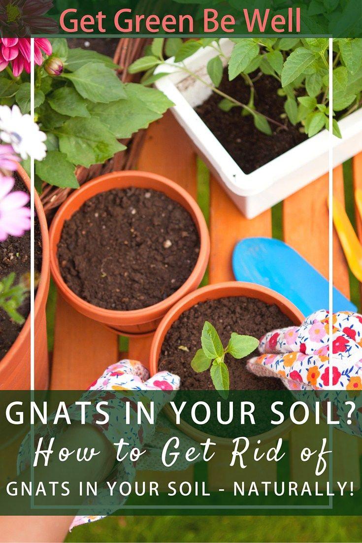 Organic Gardening Tips, Plants