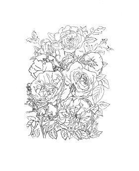 Anglické růže od Olga Brereton